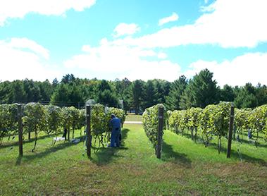 Scandia Valley Vineyards Cushing MN